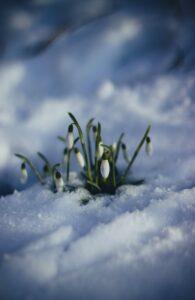 Forårsfunktioner og en fuld færdig AutoVision integration